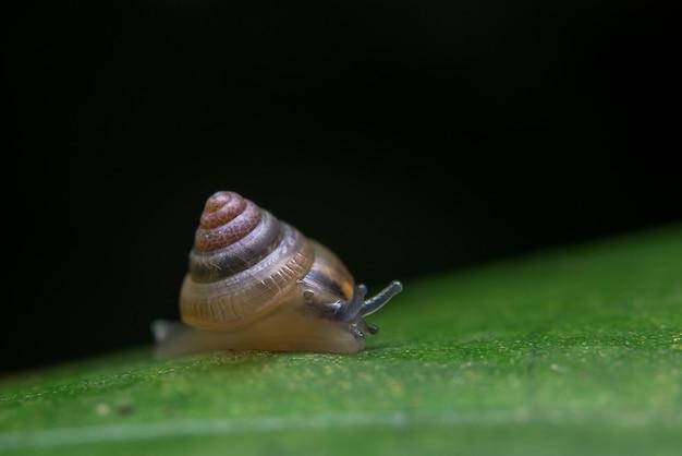 Ślimak Darmowe Zdjęcia