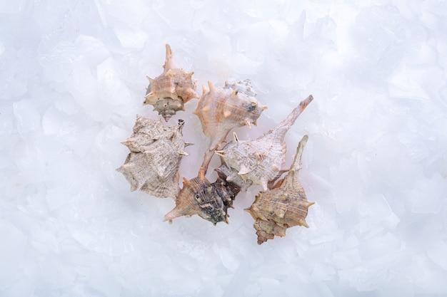Ślimaki morskie wskazały w lodzie w sklepie rybnym