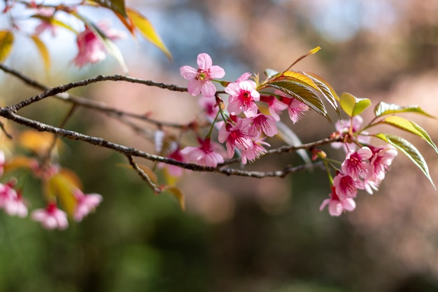 Śliwkowe kwiaty lśniące na niebieskim niebie