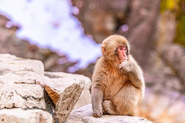 Słodka małpka siedząca na skale z ręką na brodzie