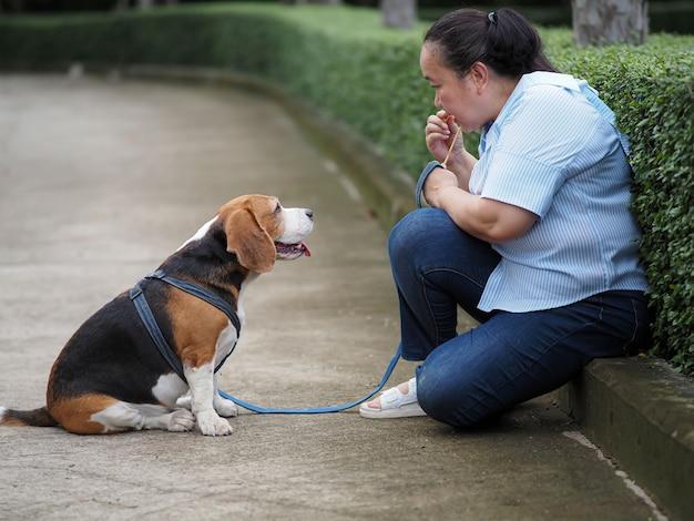 Słodki beagle siedział nieruchomo, słuchając właściciela, trenując czekanie.
