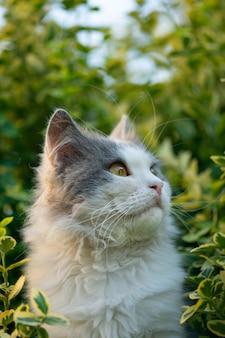 Słodki kot cieszy się życiem w ogrodzie