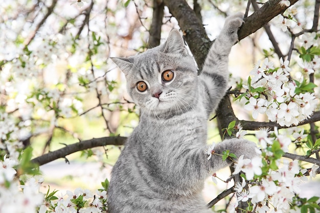 Słodki kot na kwitnącym drzewie na zewnątrz