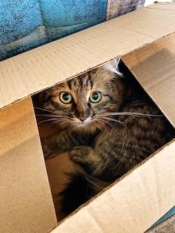 Słodki kot siedzący w kartonowym pudełku