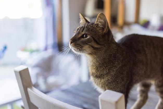 Słodki kot siedzi na białym krześle w pokoju z bliska