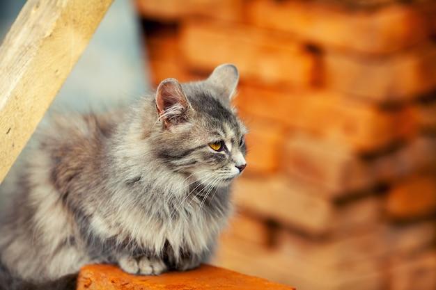 Słodki kot syberyjski siedzący w pobliżu stosu cegieł