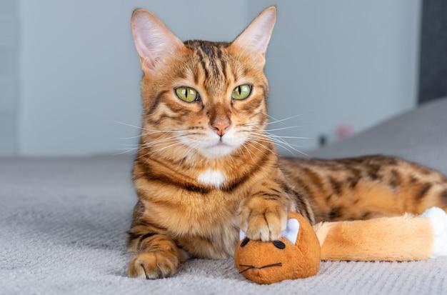 Słodki kot trzyma w łapach swoją zdobycz - zabawkową pomarańczową myszkę.
