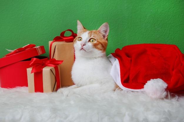 Słodki kot w czapce świętego mikołaja i pudełkach prezentowych na tle kolorowej ściany