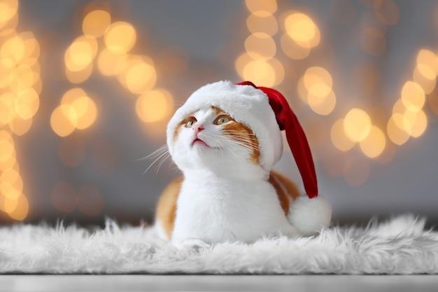 Słodki kot w czapce świętego mikołaja przed niewyraźnymi lampkami bożonarodzeniowymi