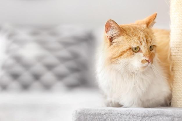 Słodki kot w pobliżu drapaka w domu