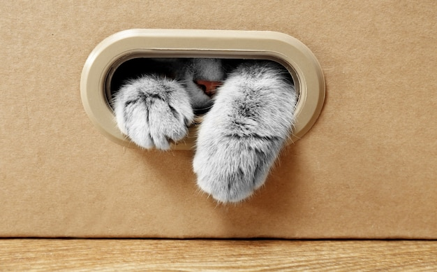 Słodki kot w tekturowym pudełku
