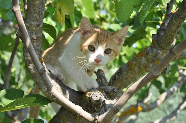 Słodki kotek o wyrazistych oczach