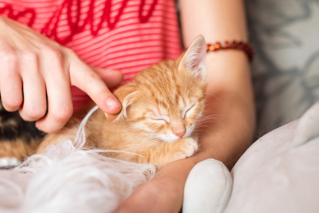 Słodki kotek śpi w kobiecych rękach właściciel zwierzaka i jej zwierzak urocze zwierzęta rudy kotek relaksujący