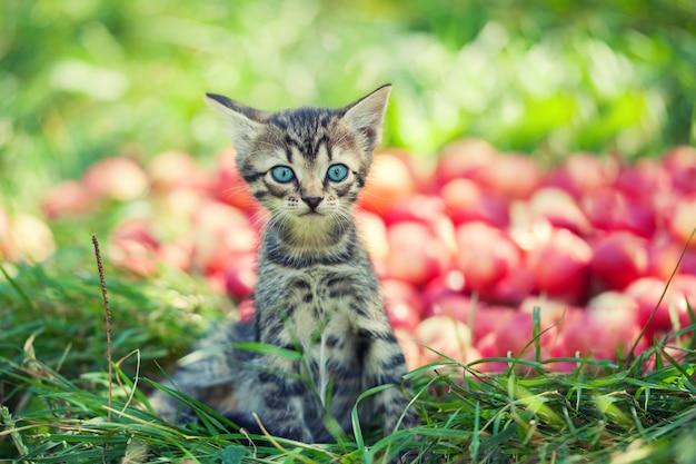 Słodki kotek w sadzie jabłkowym