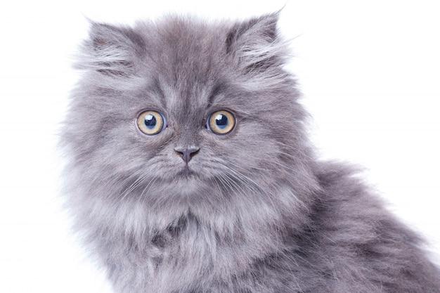 Słodki kotek