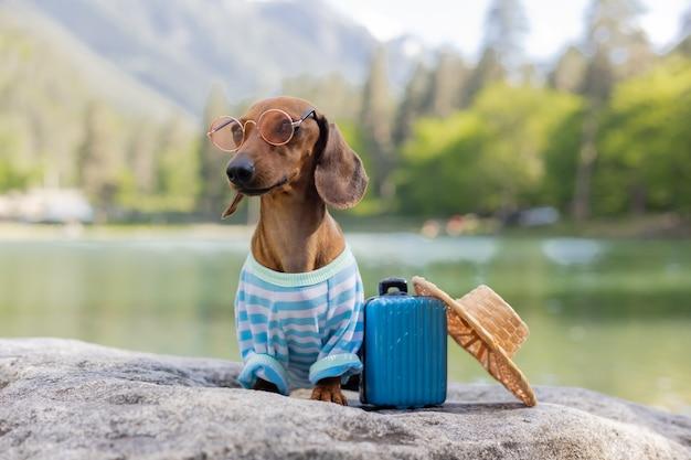 Słodki pies jamnik siedzi nad wodą z walizką na nadmorskich wakacjach ze zwierzętami