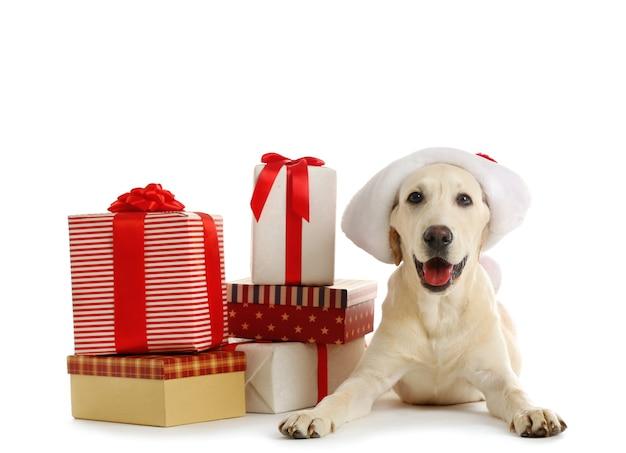 Słodki pies labrador z pudełkami prezentowymi na białym tle