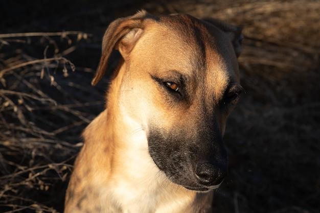 Słodki pies na wsi o zachodzie słońca