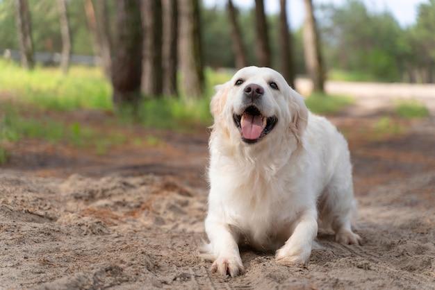 Słodki pies na zewnątrz
