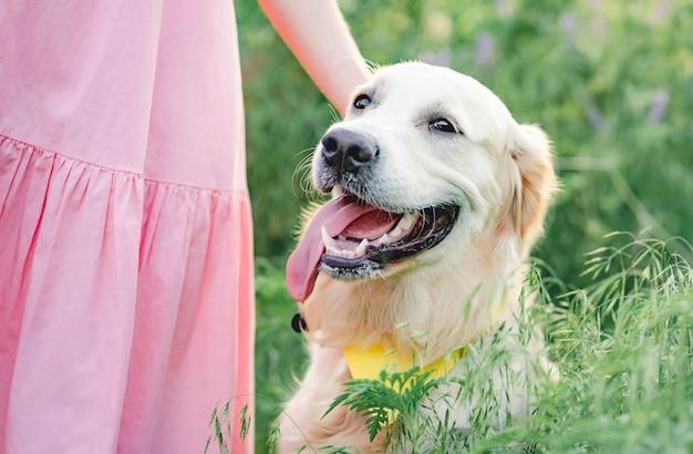 Słodki pies rasy golden retriever z dziewczyną w kolorze różowym na kwitnącym polu