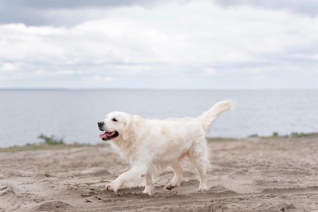 Słodki pies spacerujący po plaży
