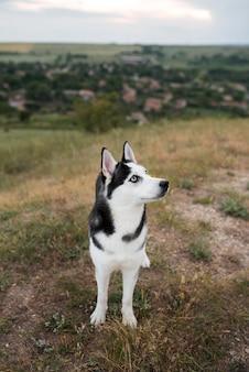 Słodki pies spędzający czas na świeżym powietrzu