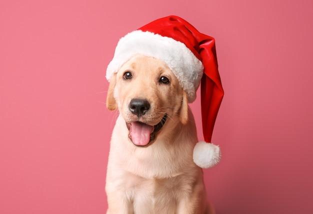 Słodki pies w czapce świętego mikołaja