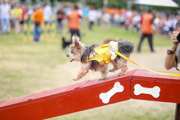 Słodki pies w kolorowych ubraniach spacerujący po parku