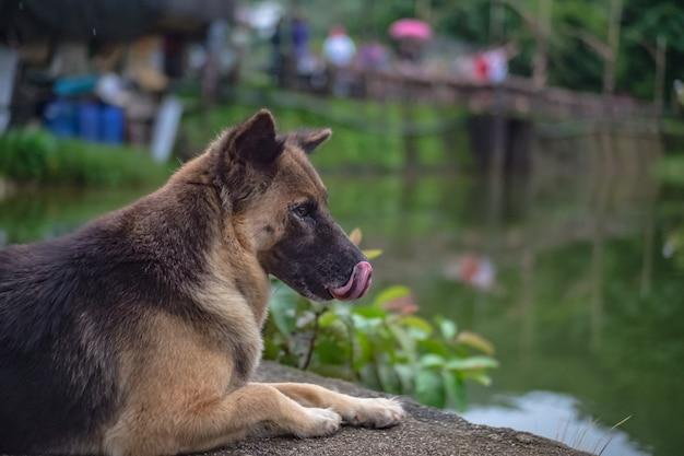 Słodki pies w miejscowości etong w mieście kanchanaburi w tajlandii. kopalnia pilok, stara kopalnia w pobliżu granicy tajsko-birmańskiej