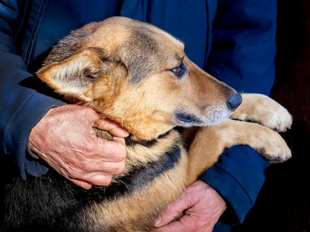 Słodki pies w ramionach mężczyzny