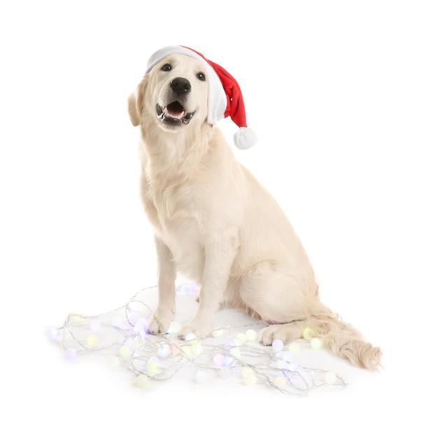 Słodki pies w santa hat siedzi z lampkami bożonarodzeniowymi