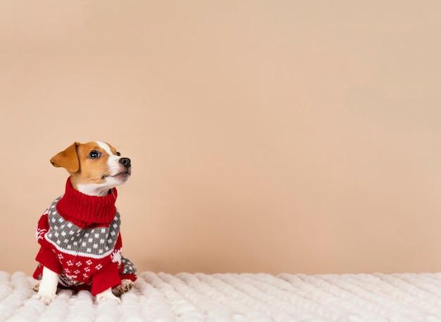 Słodki pies w swetrze
