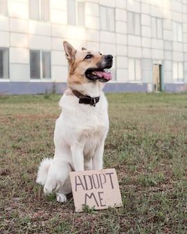 Słodki pies z banerem adoptuj mnie