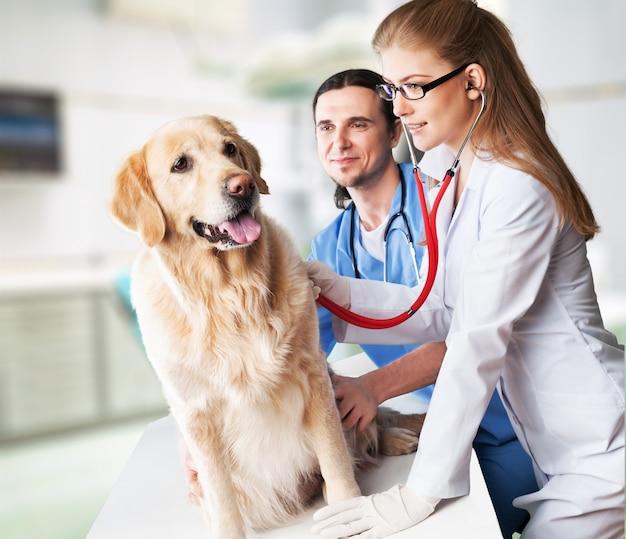 Słodki pies z weterynarzami w klinice