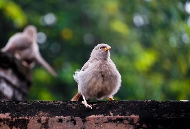 Słodki ptak na drzewie podczas sesji plenerowej