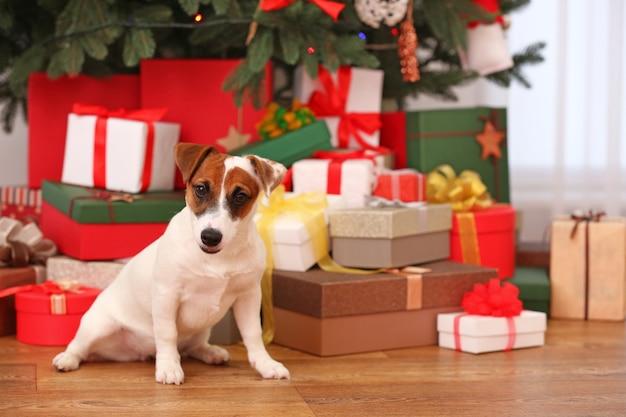 Słodki szczeniak jack russel w ozdobionym świątecznym pokoju, zbliżenie