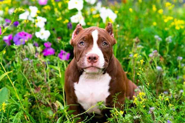 Słodki szczeniak siedzi na trawie z kwiatami w słoneczny dzień w ogrodzie zabawne małe zwierzątko...
