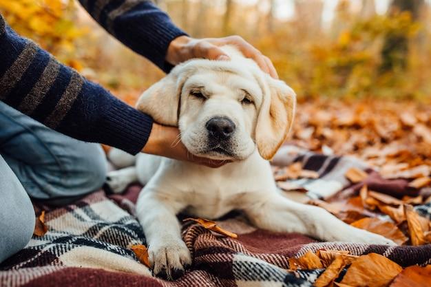 Słodki złoty labrador i jego właściciel w parku, bawią się razem.