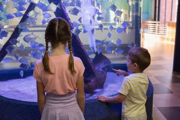 Słodkie dzieci patrząc na akwarium