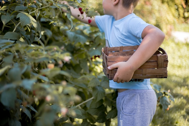 Słodkie dziecko zbiera świeże jagody na malinowym polu mały chłopiec bawi się na świeżym powietrzu w sadzie owocowym
