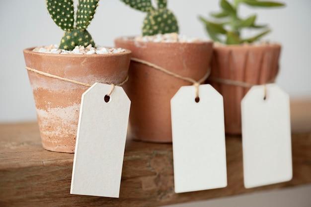 Słodkie kaktusy w doniczkach z terakoty z pustymi papierowymi etykietami