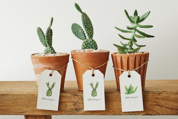 Słodkie kaktusy w terakotowych doniczkach z papierowymi etykietami