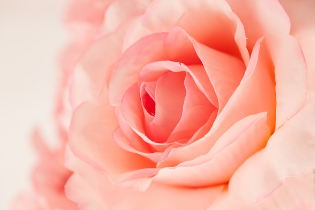 Słodkie kolor róże robić z gradientem w miękkiej części projektują dla abstrakcjonistycznego tła
