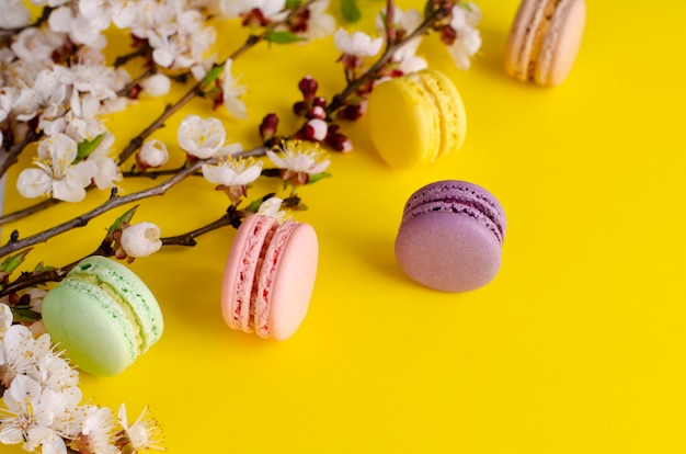Słodkie macarons lub makaroniki ozdobione kwitnącymi kwiatami moreli na jasnożółtym