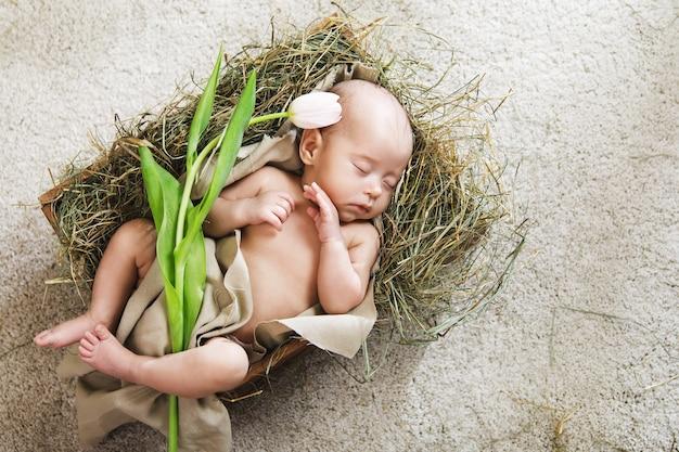 Słodkie maleństwo leży w drewnianym pudełku wypełnionym sianem i trzyma różowego tulipana