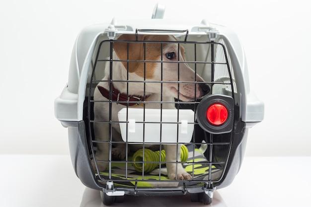 Słodkie pies w przewoźniku