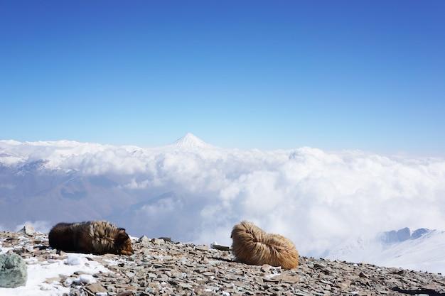 Słodkie psy schwytane na szczycie góry z widokiem na chmury