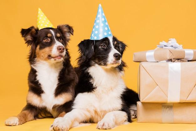 Słodkie psy z czapkami