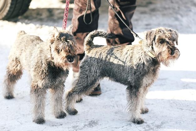 Słodkie śmieszne psy z właścicielem na zewnątrz w zimowy dzień