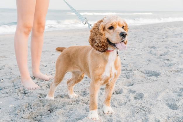 Słodkie zwierzęta pies spacerujący po piaszczystej plaży koncepcja zabawy z psem w okresie letnim